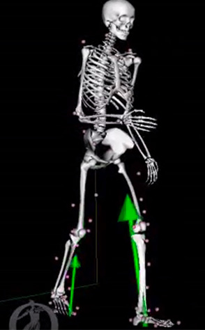 Computer model of human skeleton walking