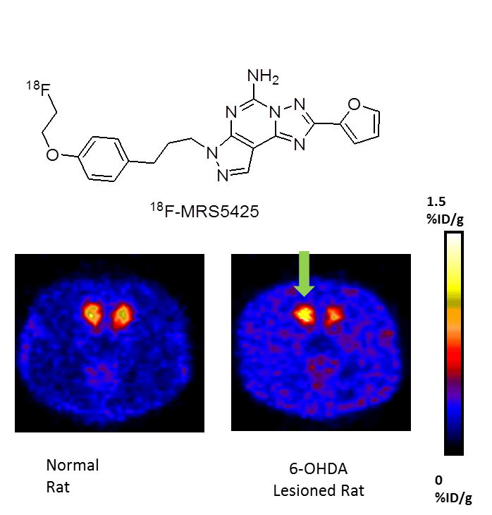 Figure of PET scan in rats