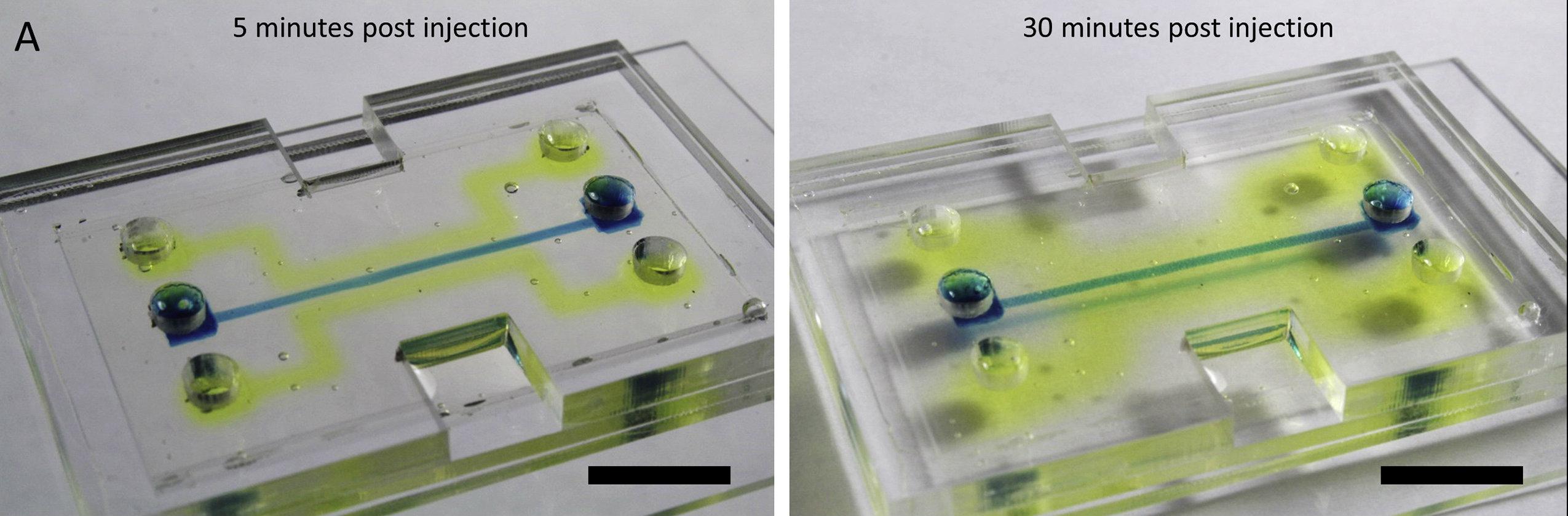 Alkaline phosphatase diffuses into silk microchip