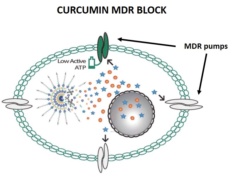 diagram of curcumin blocking MDR pumps to allow doxorubicin to kill cancer cells