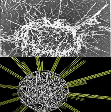 Modelo de estructura de plaquetas