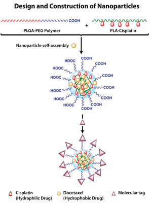 To build the nanoparticle, investigators blend the PLGA-PEG polymer with the cisplatin-bearing polymer (PLA-cisplatin). Docetaxel is then added to the mix. As nanoparticles self-assemble, docetaxel is encapsulated inside. In the final step, a molecular tag is added to enable the particle to navigate itself to the target of interest.