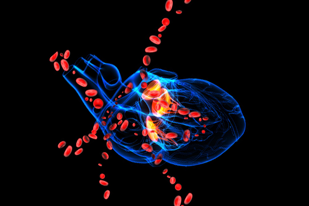 A blue 3D drawing of a human heart with large red blood cells flowing out of it