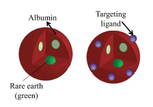 A diagram of the nanoparticles in albumin