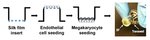 Diagram of the silk, Endothelial cell seeding, and Megakaryocyte seeding and image of the device.