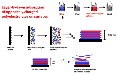 To build ultrathin films on the surface of an object, researchers alternate dipping the object in a solution of DNA, washing, and dipping in a solution of a positively-charged polymer. Electrostatic interactions hold the layers of negatively-charged DNA (blue) and positively-charged polymers (red) together. The resulting film is 100 nm thick, 10 million times shorter than a meter. Upon contact with water, such as inside the body, the film starts to decompose, releasing the DNA