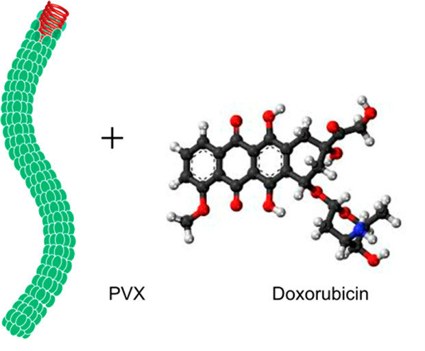 Potato virus nanoparticle plus doxorubicin