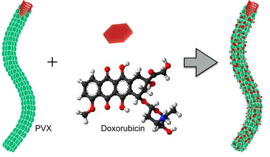 doxorubicin embedded in PVX