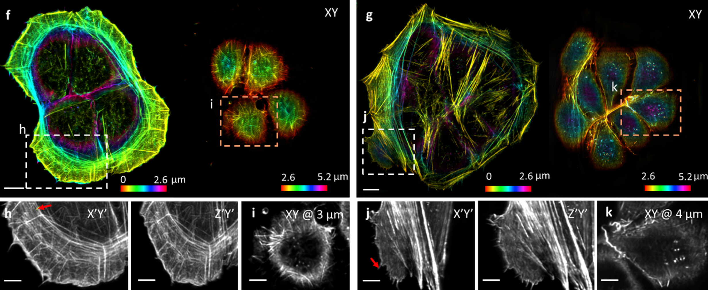 Multiple images, both in color and black and white, of cellular structures.