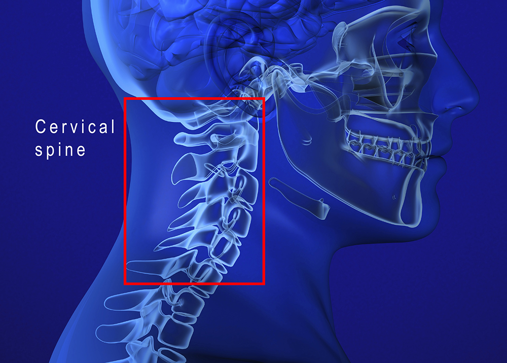 cervical spine in profile