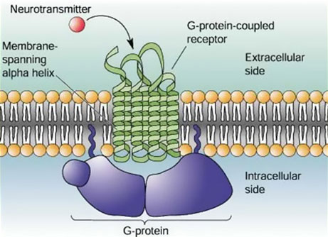 Understanding Critical Protein Structures May Speed Drug Development