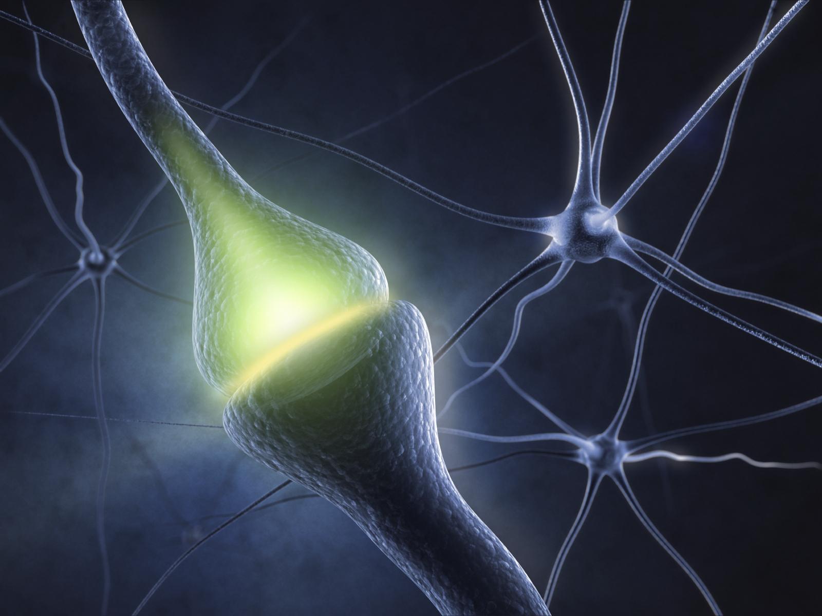 neuron with labeled beta actin