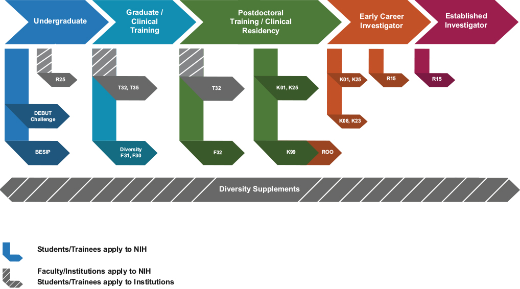 diagram showing the career path from undergraduate through established investigator