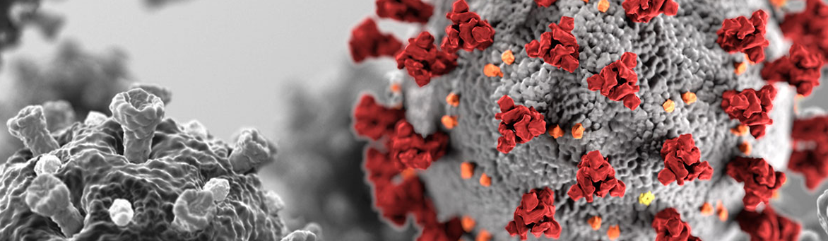 Microscopic view of the COVID-19 virus