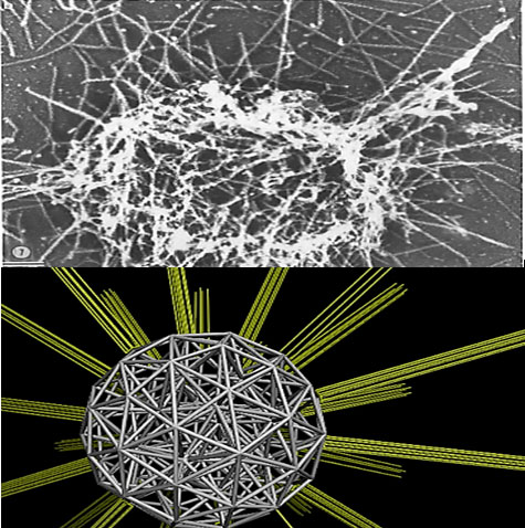 Platelet (top) and model of platelet substructural elements (bottom). Source: Danny Bluestein, Stony Brook University.