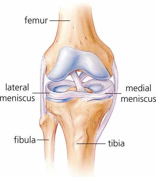 diagram of knee joint with ligaments labeled