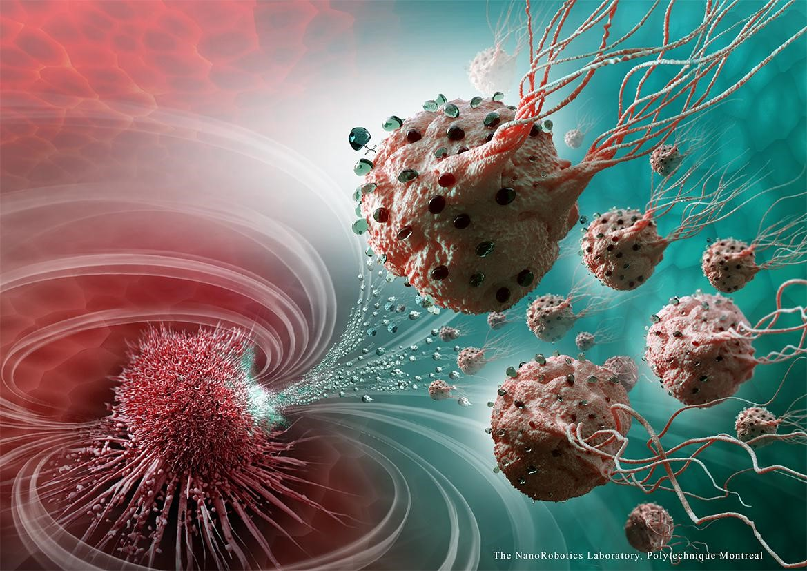Illustration of magnetic bacteria delivering drugs to a tumor