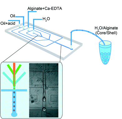 Illustration of Weitz's microfluidic chip