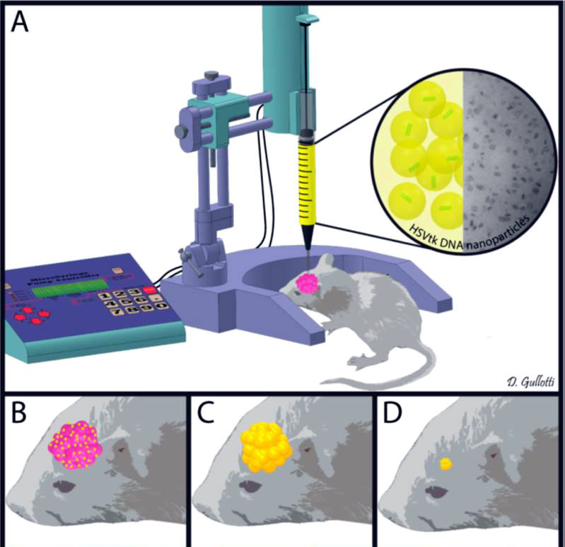 Scheme for injection of nanoparticles into rat gliomas