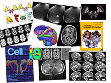 A collage of results using one of the many toolkits available on the open-access neuroinformatics clearinghouse, NITRC.