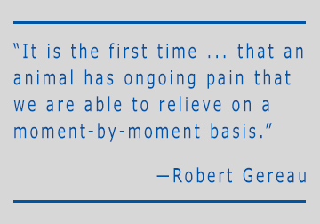 """It is the first time ... that an animal has ongoing pain that we are able to relieve on a moment-by-moment basis.""—Robert Gereau"
