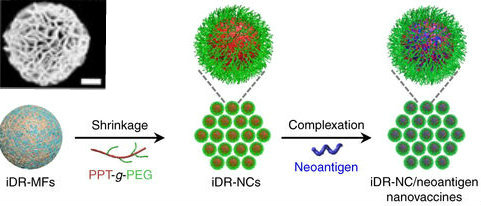 Swiss Army Knife Nanovaccine Carries Multiple Weapons To