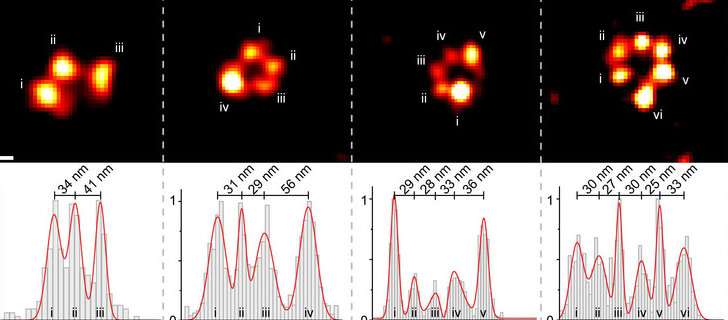 comparison of super-resolution identification of labeled proteins and qPAINT detection of the same proteins