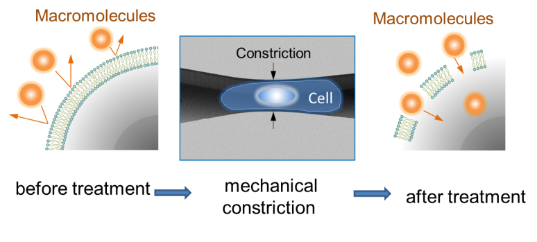Large molecules enter the cell through holes created when the cell is forced through a constricted section of the channel