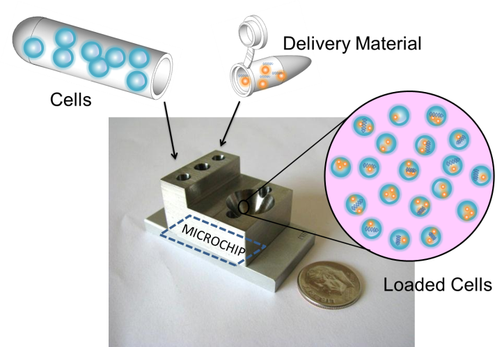 Cells and the delivery material are added separately and flow together through the small device that houses the microchip. The pink circle depicts cells successfully loaded with the delivery material.