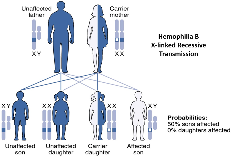 Diagram showing outcome of X-linked recessive inheritance